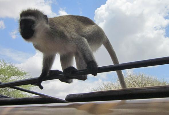 Снега Килиманджаро - Фото №4