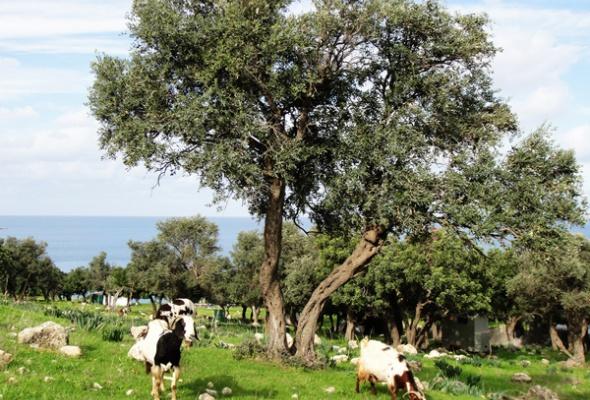 Кипр: Правый руль заодин день - Фото №1