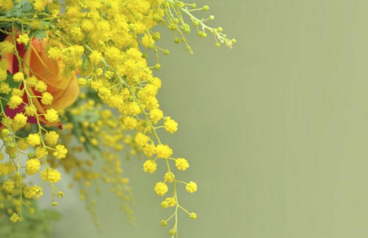 Цветы кпразднику можно купить на76цветочных ярмарках