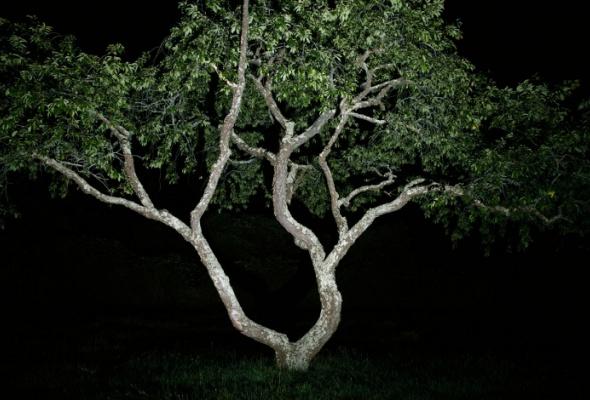 Джесси Фроман «Ночь» - Фото №1