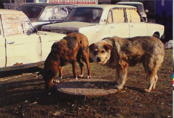 Собачья жизнь - Фото №0