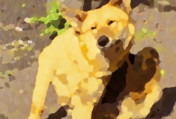 Собачья жизнь - Фото №3