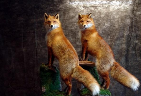 Эти забавные животные - Фото №1