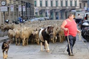 Последний пастырь