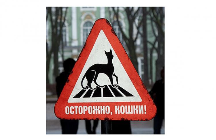 6апреля вЭрмитаже пройдет «День Мартовского Кота»