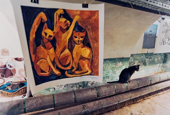 День эрмитажного кота - Фото №6