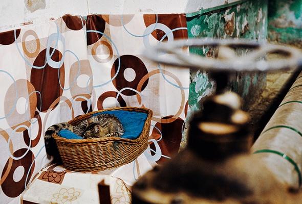 День эрмитажного кота - Фото №7