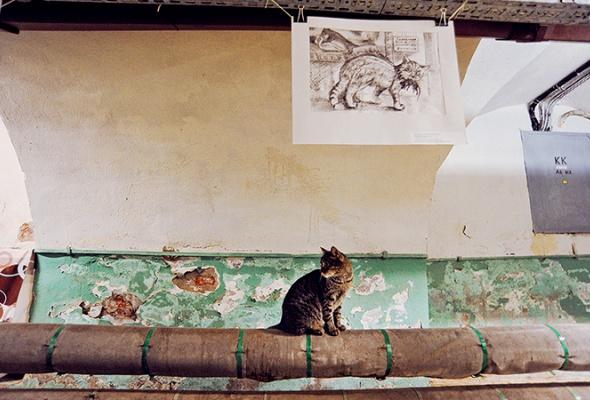 День эрмитажного кота - Фото №0