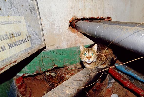 День эрмитажного кота - Фото №9