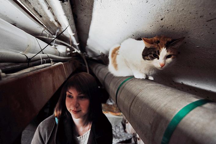 День эрмитажного кота