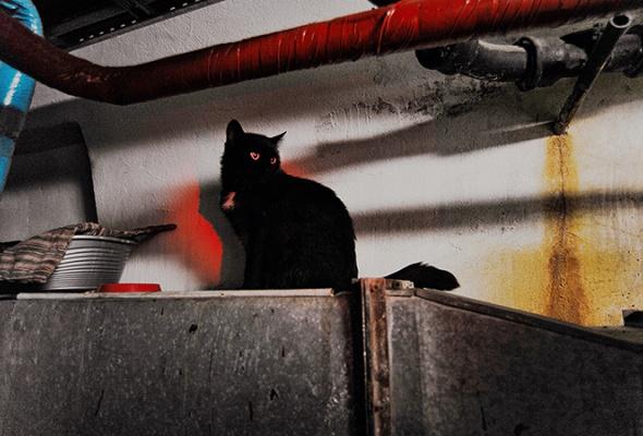 День эрмитажного кота - Фото №14