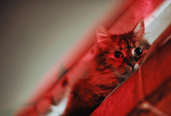 День эрмитажного кота - Фото №16