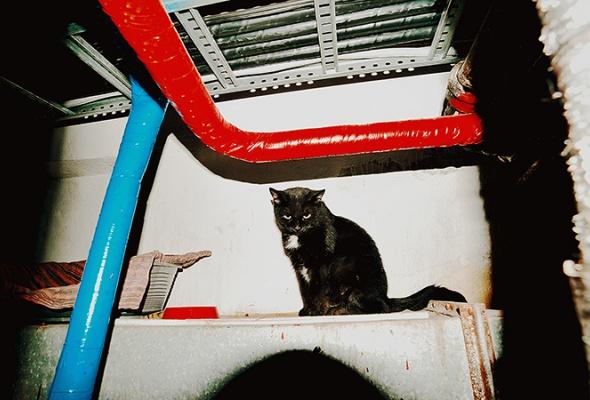 День эрмитажного кота - Фото №17