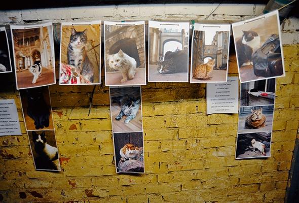 День эрмитажного кота - Фото №18