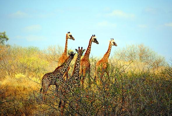 Запах Африки - Фото №1