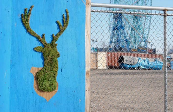 Стены московских домов будут украшать мхом
