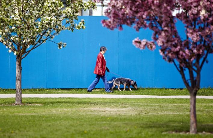 Наулицах появятся урны спакетами для собачьих отходов