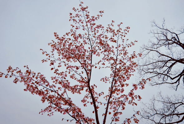 Весенняя вишня - Фото №10