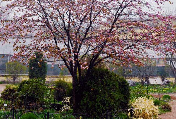 Весенняя вишня - Фото №14
