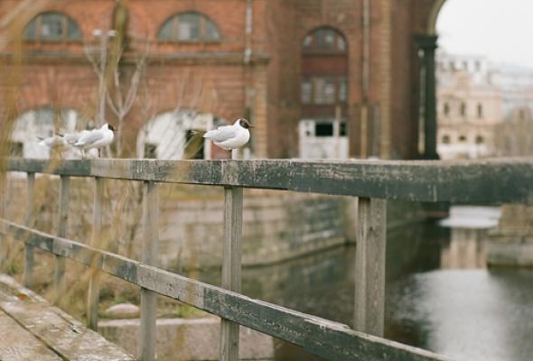 Новая Голландия (закрыто на реконструкцию) - Фото №0