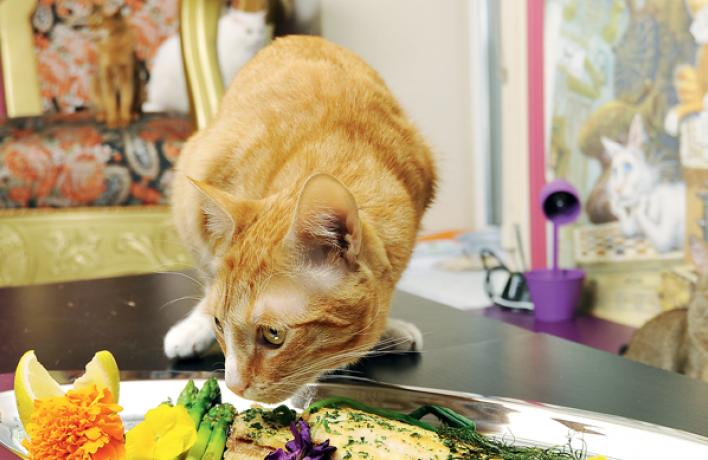7рыбных блюд сэкспертными оценками котов
