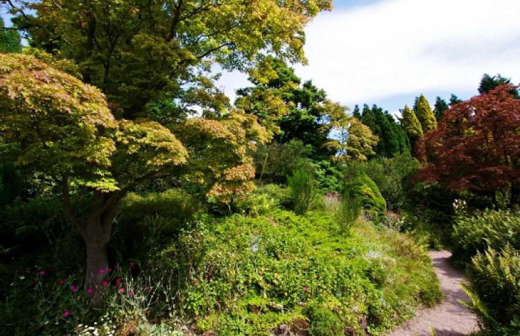 Ландшафтная палитра. Часть 1: деревья и кустарники