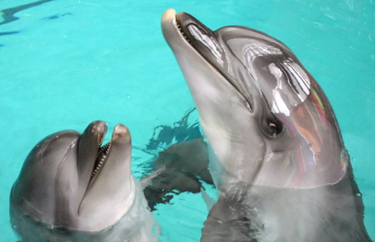 Представления с дельфинами