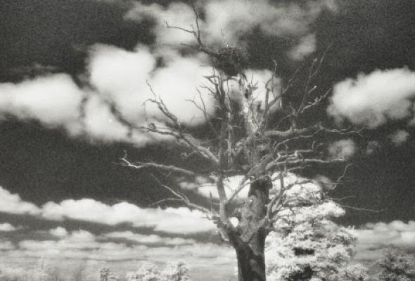 Николай Борисов «Присутствие времени» - Фото №3