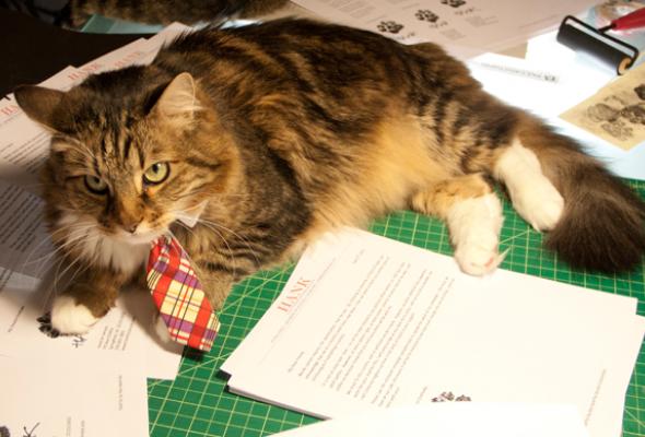 Коты имосты - Фото №1
