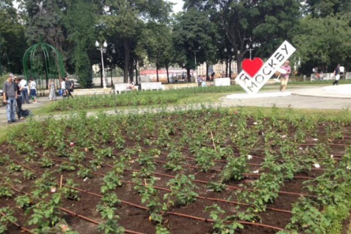 Розарий в парке Горького