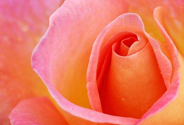 5мест вМоскве, где можно любоваться цветами - Фото №0