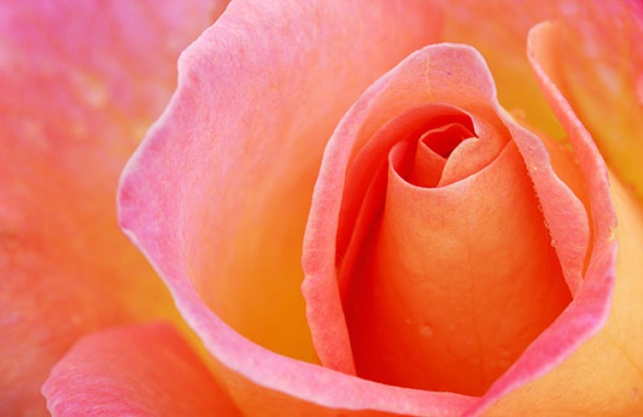 5мест вМоскве, где можно любоваться цветами