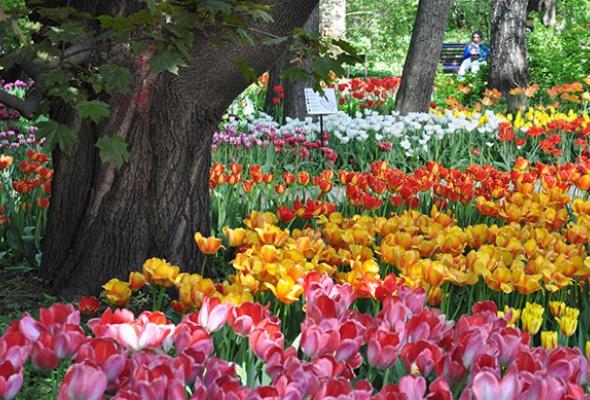 5мест вМоскве, где можно любоваться цветами - Фото №3