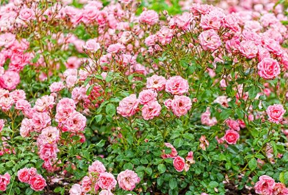 5мест вМоскве, где можно любоваться цветами - Фото №2