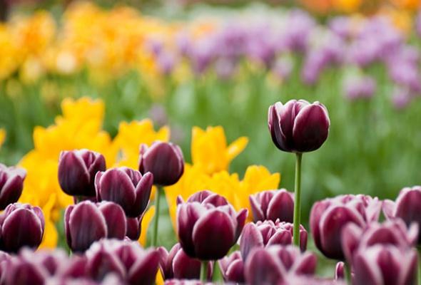 5мест вМоскве, где можно любоваться цветами - Фото №4