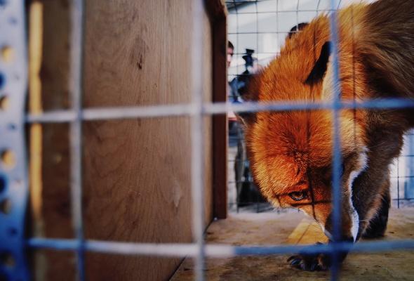 Зоолофт - Фото №2
