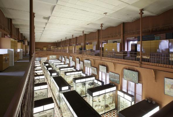 Зоологический музей - Фото №0