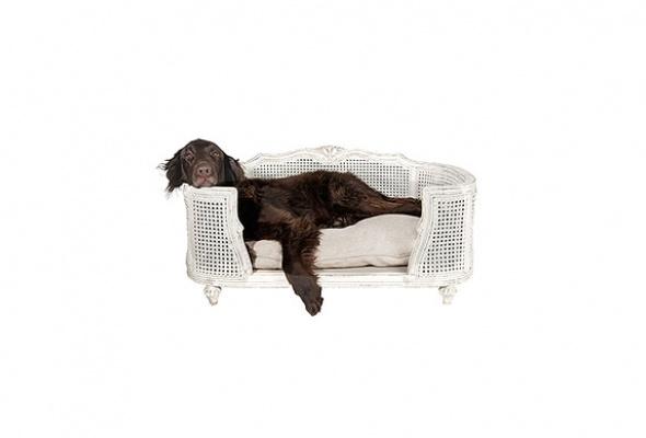 Мебель для животных - Фото №0