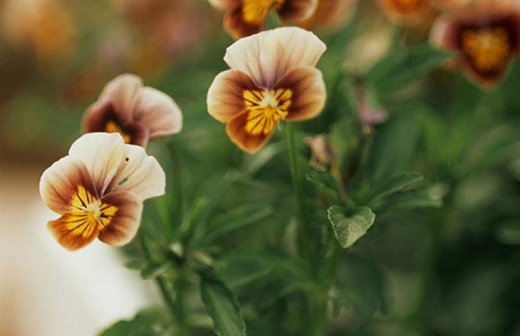 Цветы/Flowers-IPM-2013