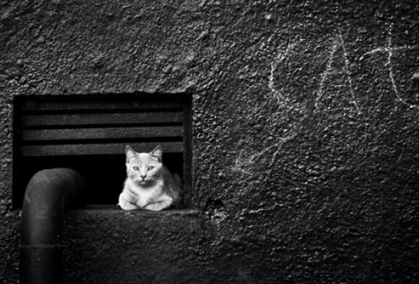 Фотокотопес - Фото №4