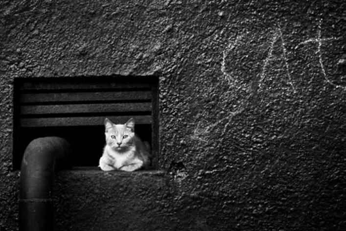 Фотокотопес