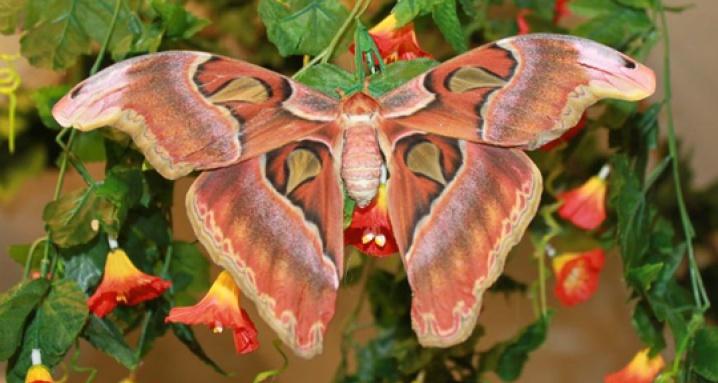 Тропический рай, музей живых бабочек