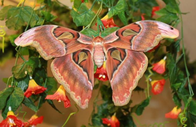 Пауки-птицееды в гостях у бабочек