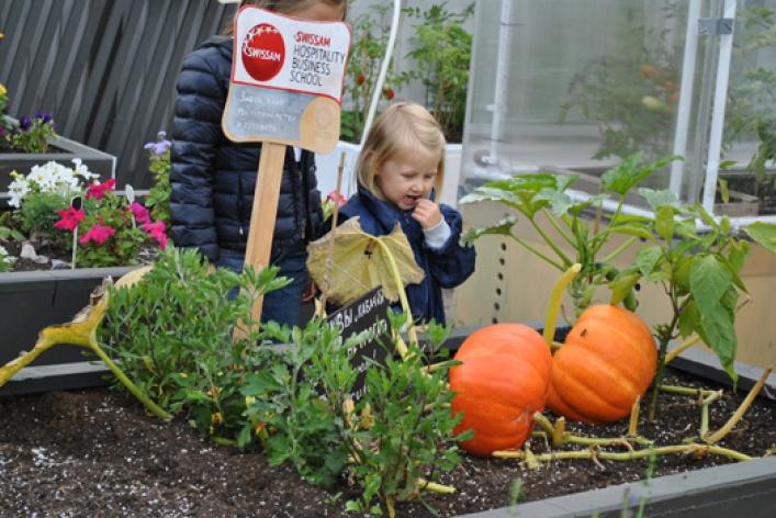 Праздник урожая в Новой Голландии
