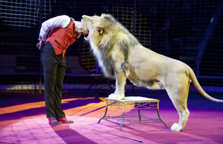 Делать в цирке чудеса!