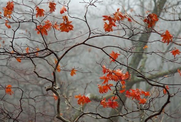 НаПатриарших прудах открылась выставка фотографий «Лесные истории. Осень» - Фото №2