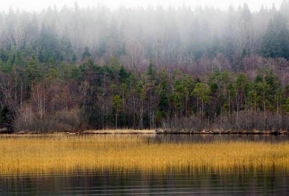 НаПатриарших прудах открылась выставка фотографий «Лесные истории. Осень» - Фото №7