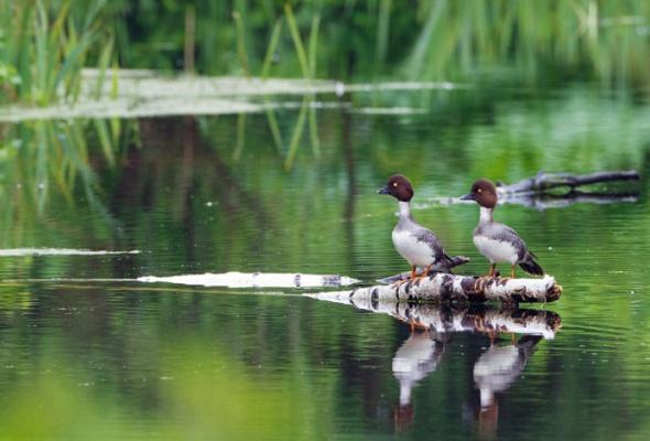 НаПатриарших прудах открылась выставка фотографий «Лесные истории. Осень» - Фото №9