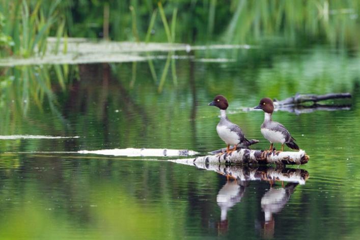 НаПатриарших прудах открылась выставка фотографий «Лесные истории. Осень»