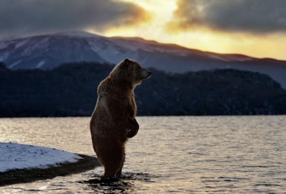 НаПатриарших прудах открылась выставка фотографий «Лесные истории. Осень» - Фото №14